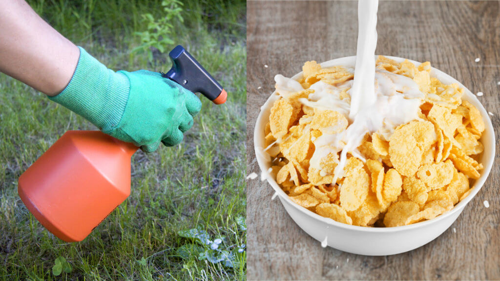 Study Finds Cheerios Oats Other Breakfast Foods May Contain Weed Killer