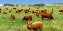 Organic, grass-fed beef: Nutritious food choice or marketing hype?