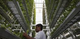 greenhouseindia