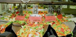 veggie sorting machine simplot