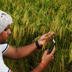 Fnm QU nb PVs farmer india ST