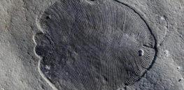 million year old fat molecule reveals worlds earliest animal