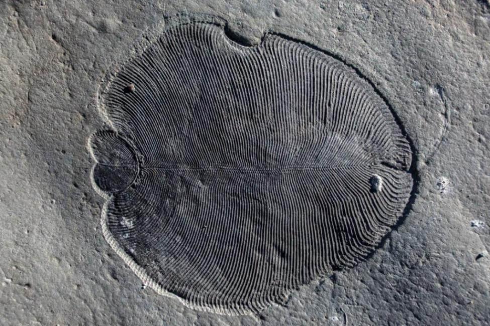 9-25-2018 558-million-year-old-fat-molecule-reveals-worlds-earliest-animal