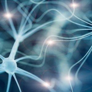epilepsy autism genetics neurosciencenews