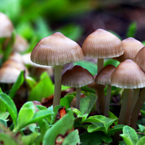 baby mushrooms
