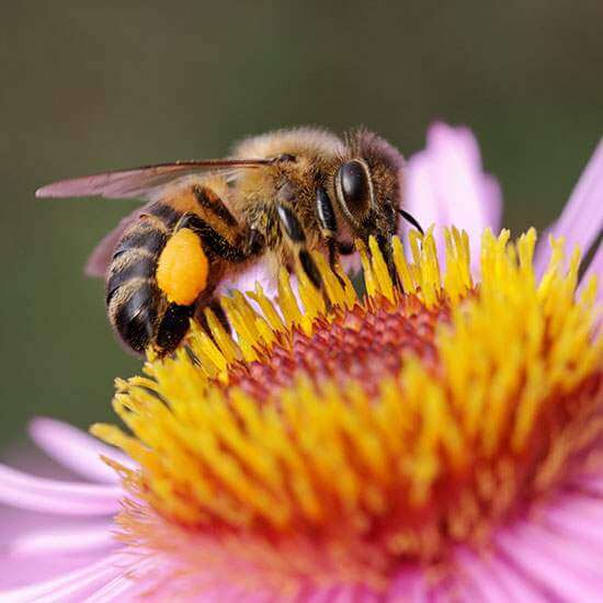 United Nations: Intensive agriculture driving bee declines