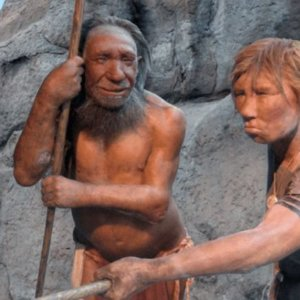 neanderthals effective healthcare compassion x