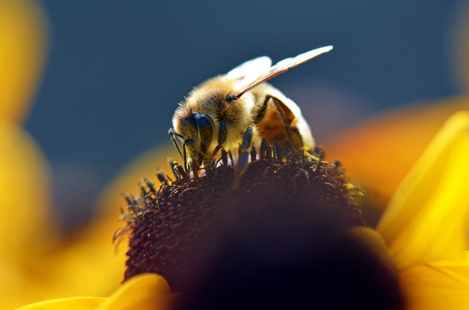 Canada's suspect move to phase out neonicotinoids to