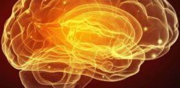 'Bravery cells': Courage, risky behavior, stress linked to hippocampus