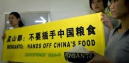 High profile dispute over GMO safety shines spotlight on China's biotech handwringing