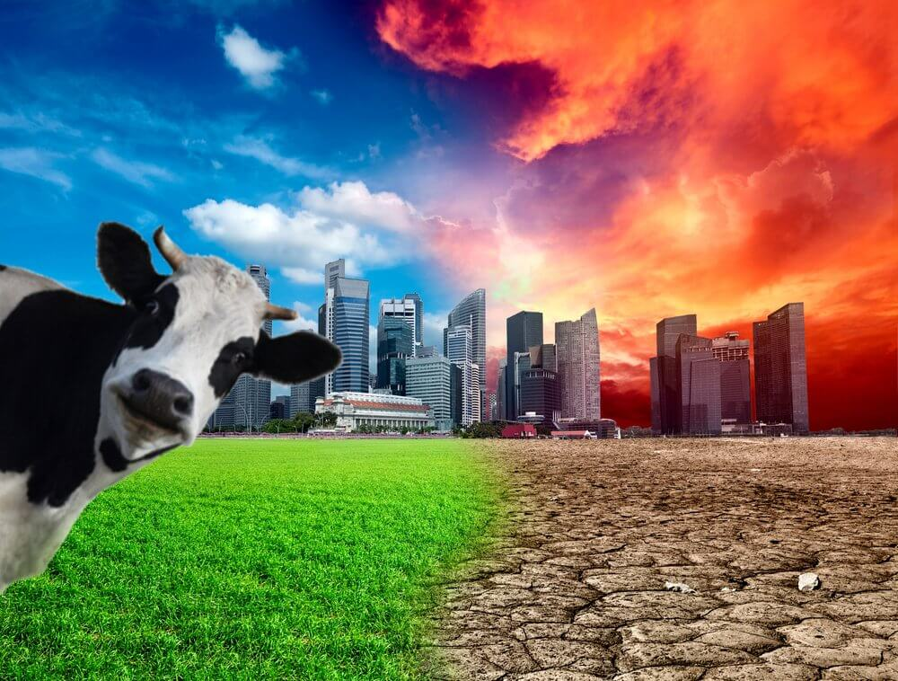 cow global warming