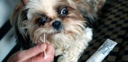 How DNA health screening of pets can lead to tragic consequences
