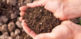 Soil in hands 10 17 18