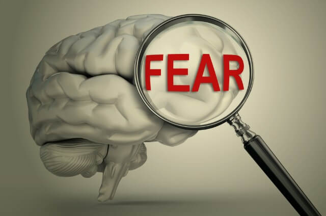 Image result for fear the brain