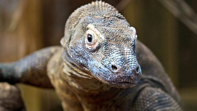Not so different after all: Reptile and human brains have a
