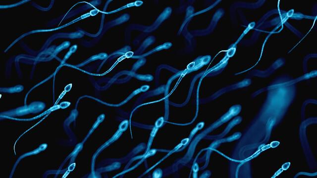 af aa b e d sperm
