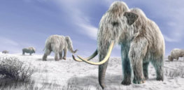 11-27-2018 can-scientists-clone-a-woolly-mammoth-should-theys-featured-photo