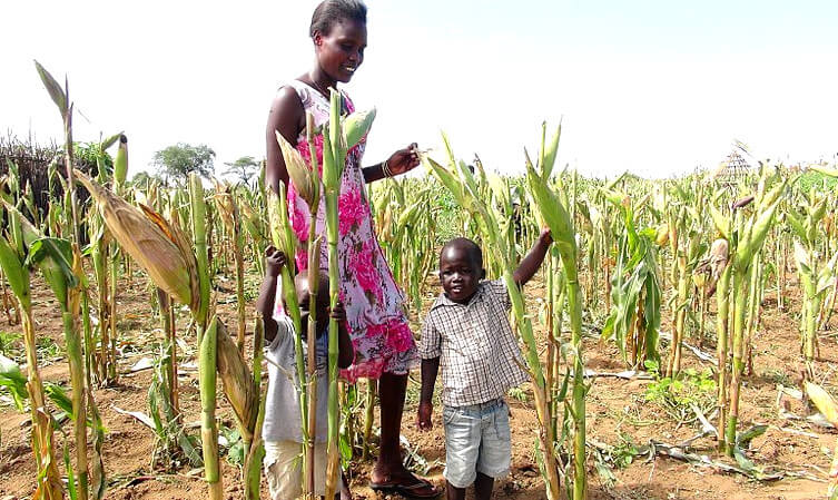 px Maize farming in drought areas