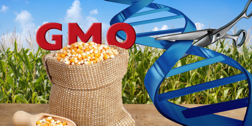 GMO Maize and Gene Editing x