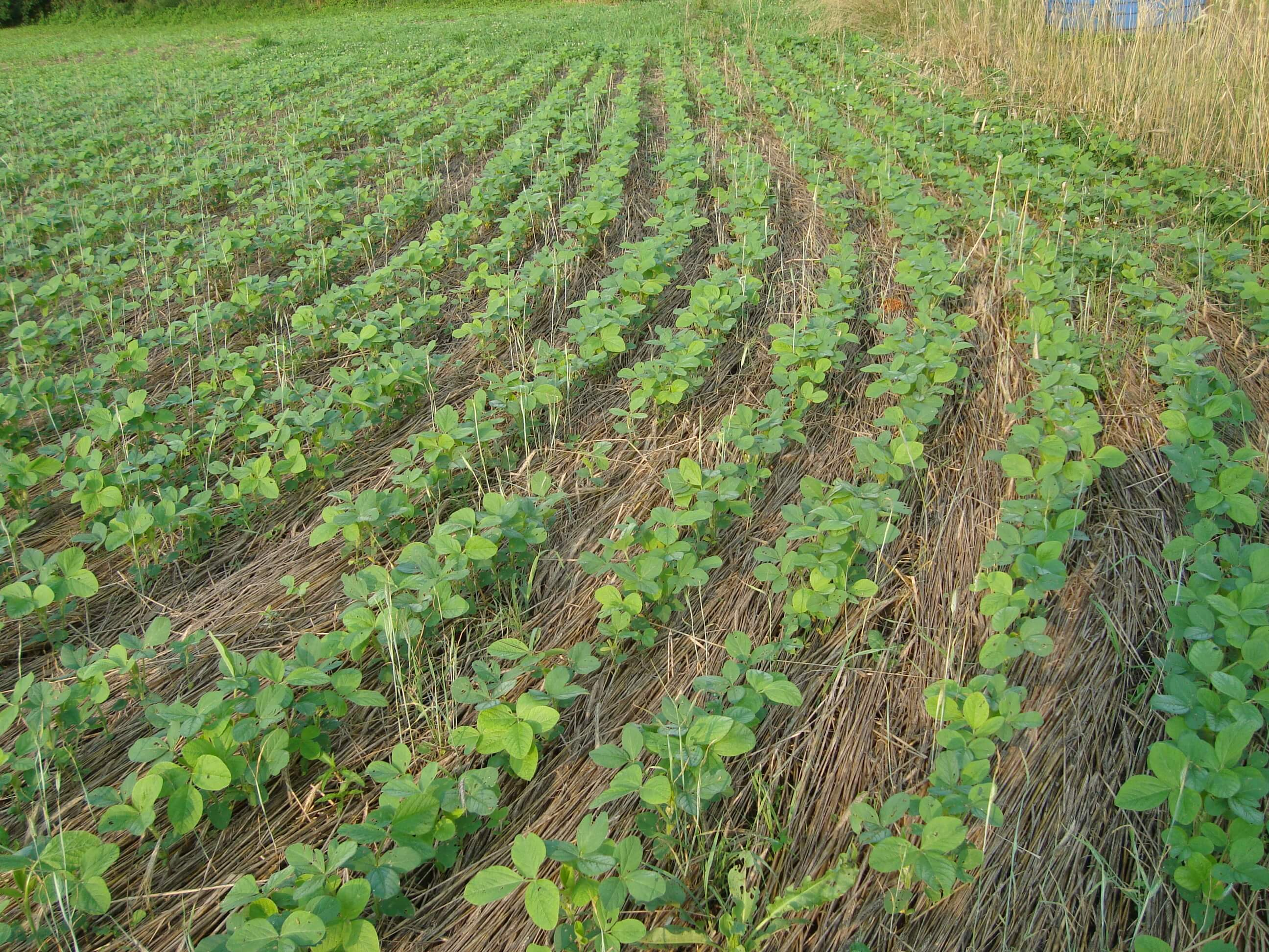 cover crops 11 8 18