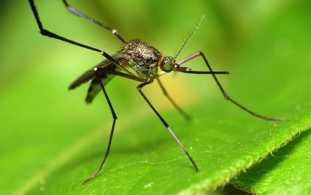 gene drive