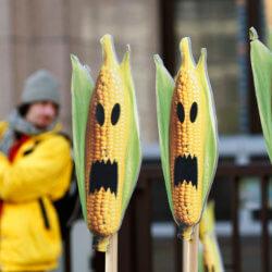 EU's negative attitude toward GMOs shaped by 20 years of anti-biotech 'fear-mongering,' USDA finds