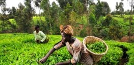 In boon to poor farmers, Ghana poised to introduce GMO crops