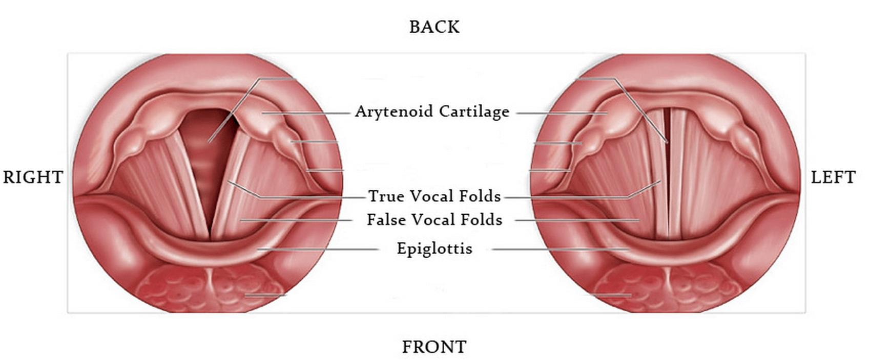 How Freddie Mercury Got His Voice It Wasnt His Teeth Genetic