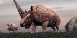 12-5-2018 siberian-rhino-sh-jef-181127_hpMain_4x3_992