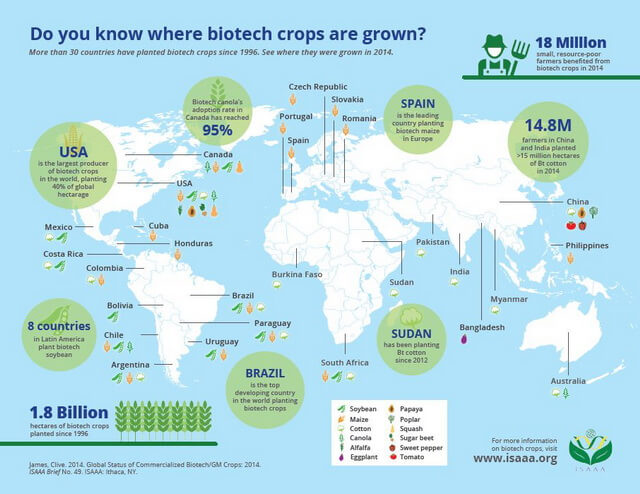 do you know where biotech crops are grown