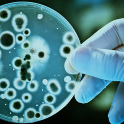 Fighting drug-resistant bacteria; consumers embrace gene-edited food; bomb-detecting plants; and life-saving biosimilar medicines