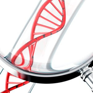 brca genes found