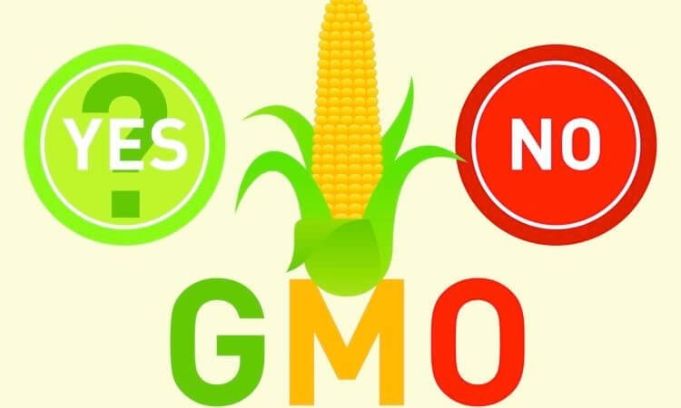 gmo risks and benefits