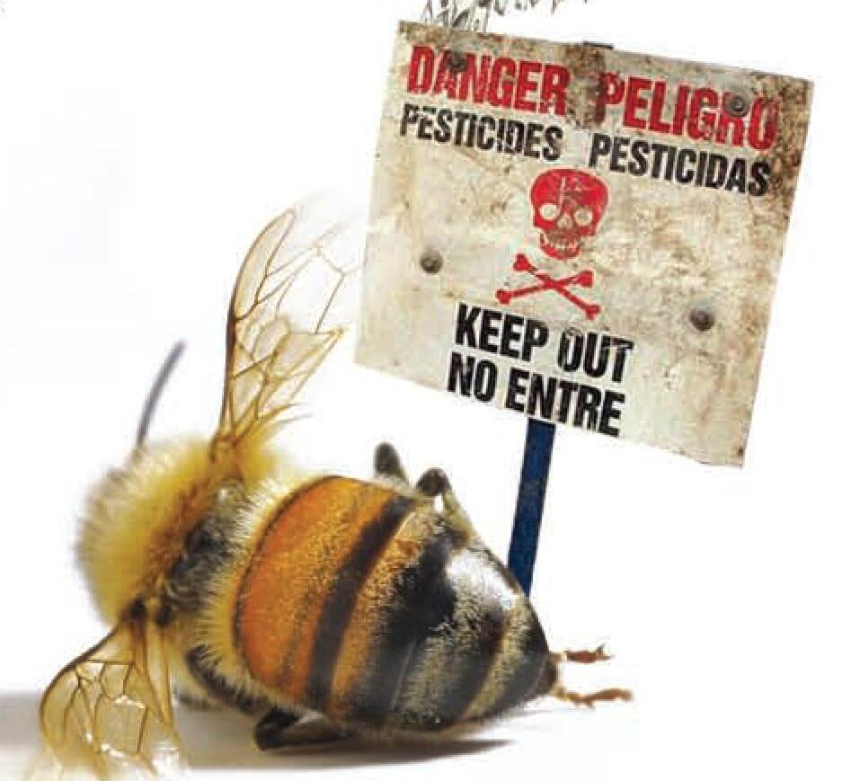 honey featured image