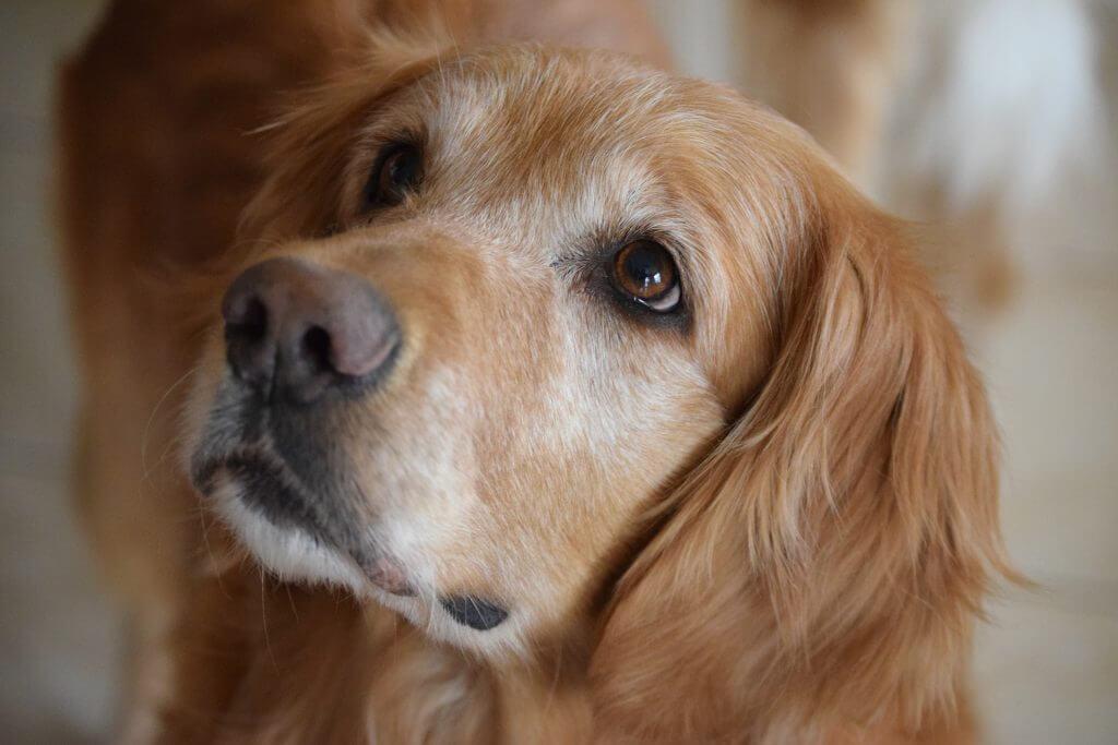 least aggressive dog breeds canna pet x