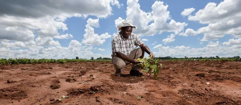 agriculture afrique climat e x