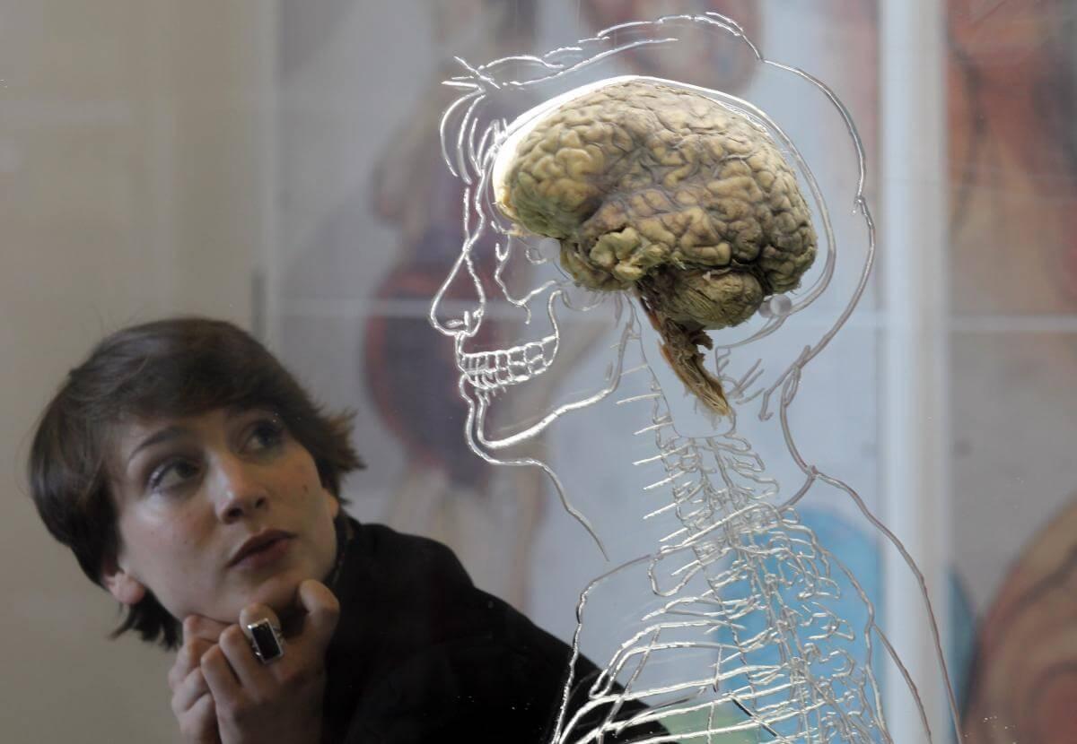 2-4-2019 brain