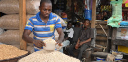 cowpea market iita