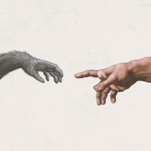 2-13-2019 evolution