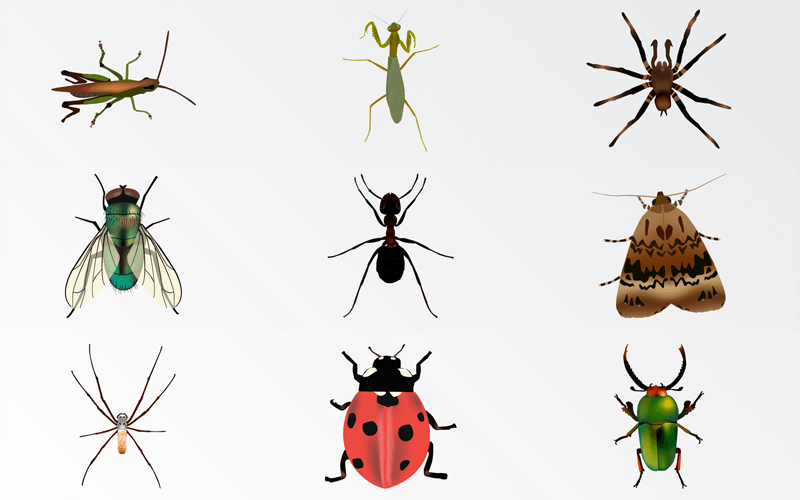 Are Bugs Disappearing? A Science-based 'insect Apocalypse