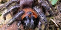 px blacktunnelweb head edit