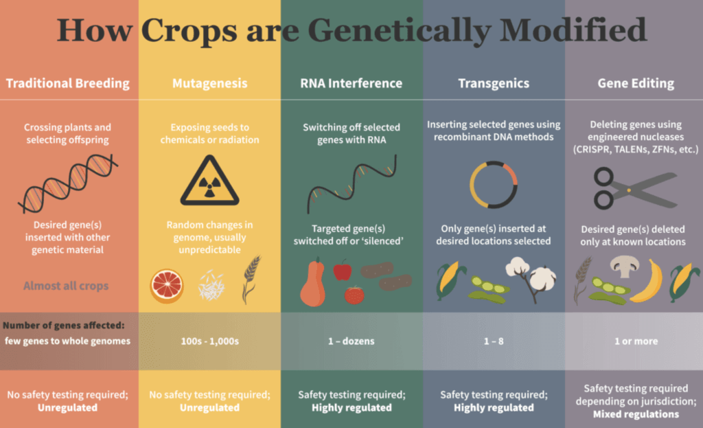 How Crops are Genetically Modified