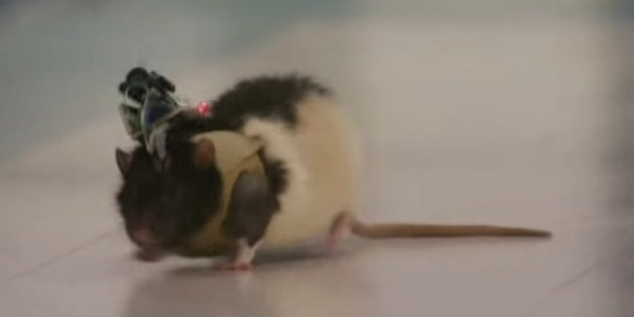 2-20-2019 the rise of the rat cyborgs forecasts the glorious merger of biology and ai