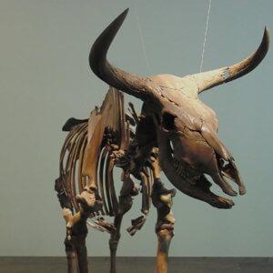 3-18-2019 copenhagen aurochs