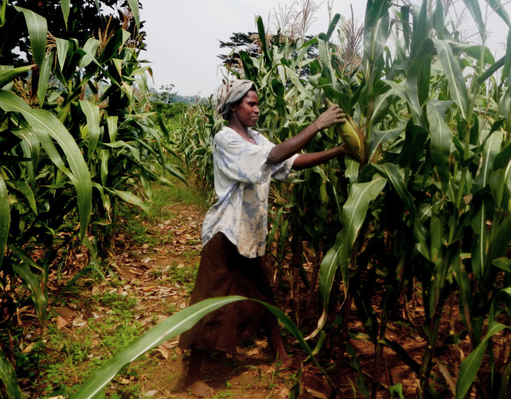 Africa looks to build food self-sufficiency as COVID disrupts global supply chain