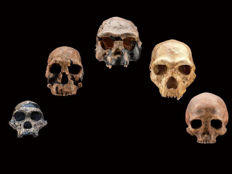 3-6-2019 ho skull casts front