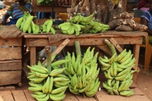market plantain banana africa green fruit