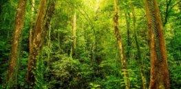 p ecuador rainforest