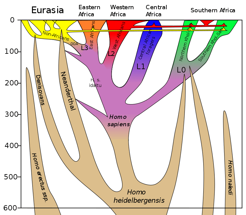 px homo sapiens lineage svg