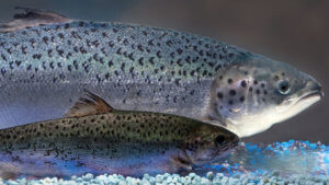 salmon wide b d bbafe d b bf e a